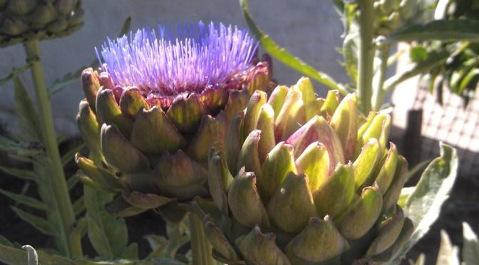 In the summertime, when the weather is hot…tour the Presidio gardens!