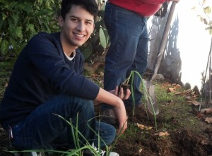 Planting garlic in the Presidio Heritage Garden today, on his winter break from school. Photo by Anne Petersen.