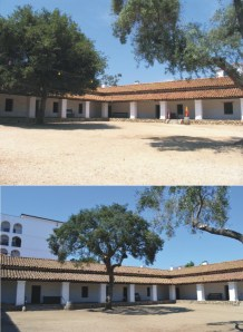 Before and after photographs of trees in the Casa courtyard. Photo by Michael Imwalle.
