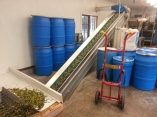 The first load of olives heading into the crusher. Photo by Wayne Sherman.