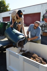 Mike and Gabe Dumping 600 lbs grapes. Photo by Karen Schultz Anderson.