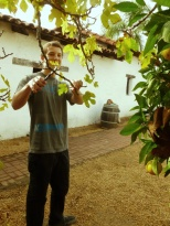 Timmy taking cuttings of Mission Fig.