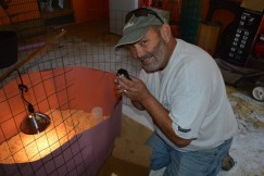 Mike Imwalle tending the baby chicks destined for the Presidio chicken coop.