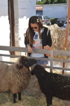 Spending time with the sheep at the Early California Days program.