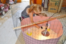 Leeann Haslouer with the set up for the baby chicks at the Mills property. Photo by Mike Imwalle.