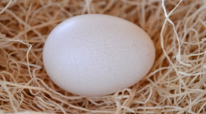 Eggsxellent News!