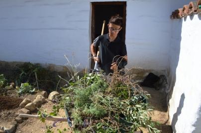 5-pruning-herbs