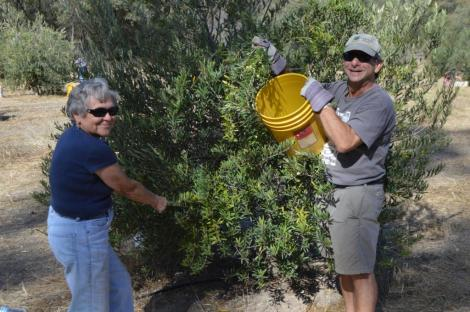 Board member Leslie Zomalt and David Stone enjoying a tree full of fruit. Photo by Mike Imwalle.