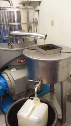 Liquid gold coming from olive crushing equipment at Figueroa Farms. Photo by Leanne Haslouer.