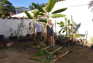 Josh and Anne transplanting banana pups at the Presidio  Northeast Corner. Photo by Mike Imwalle.